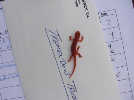 5-legged salamander