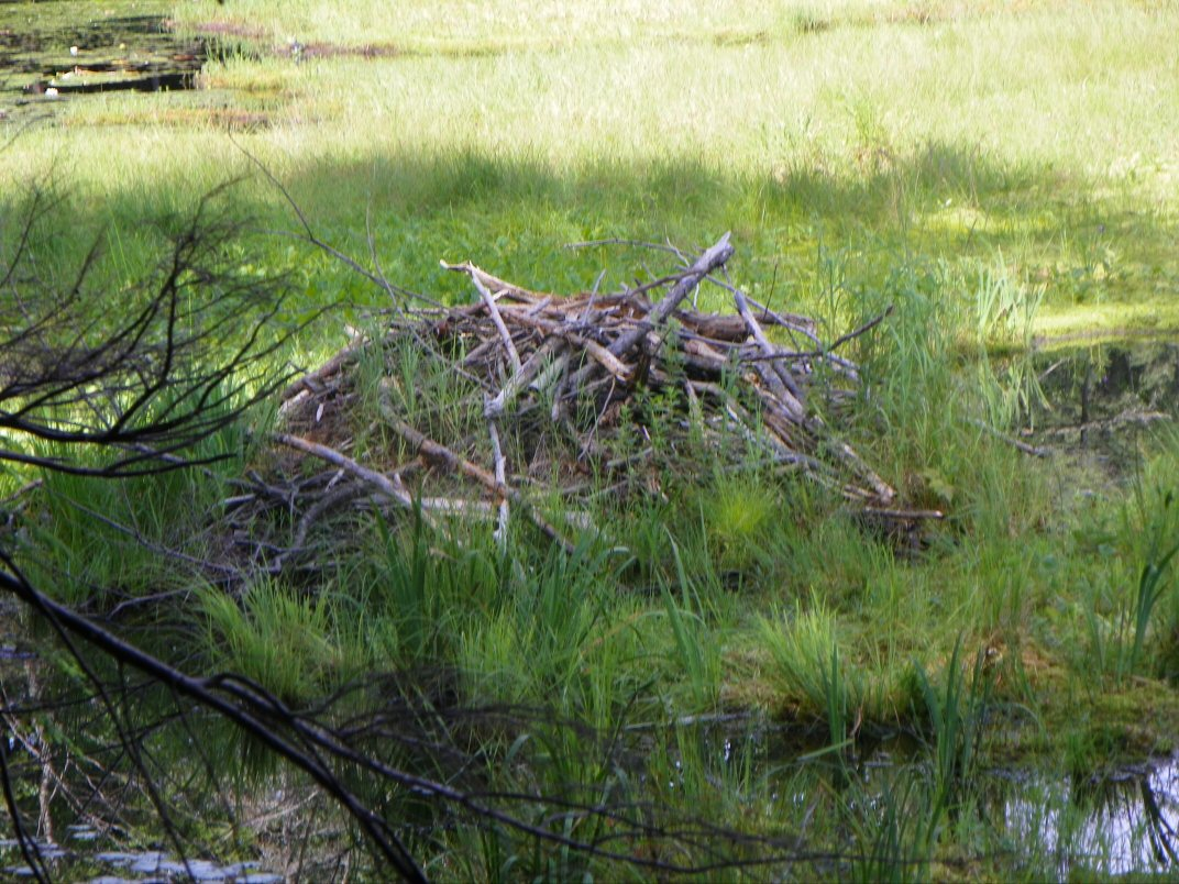Beaver Hut at Newcomb Pond