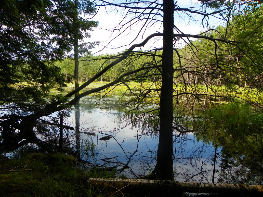 View of pond at end of trail